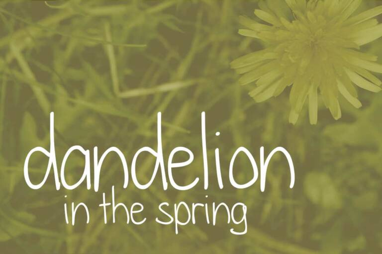 dandelion in the spring featured image